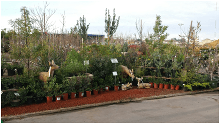 Payless Nursery Prides Itself On Having One Of The Largest Selections Ca Native Plants In San Jose Area We Stock A Varied Selection Shrubs