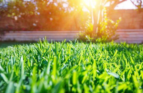 Lawn Mowing Guide by Payless Hardware & Rockery