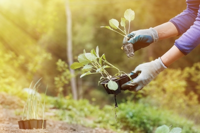 Water Conservation for Landscaping in San Jose, CA