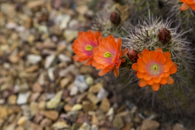 Understanding Xeriscaping with Payless Hardware and Rockery