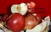 Nature of Spice Zee NectaPlum