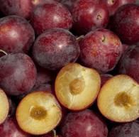 Nature of Burgundy Plum