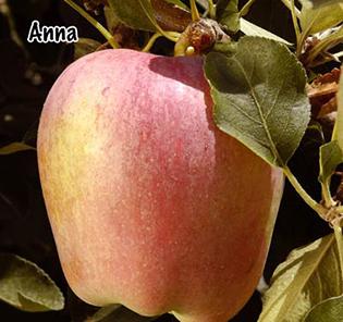 Fruit Trees | San Jose, CA | Payless Hardware & Rockery
