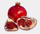Pomegranates in San Jose, CA