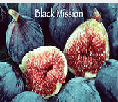 black-mission