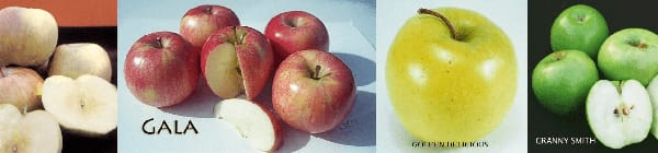 4 in 1 Apples Multi-Graft Trees at Payless Hardware & Rockery