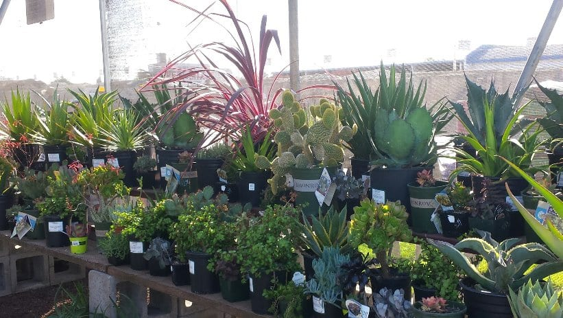 Drought Tolerant Plants at Payless Hardware & Rockery