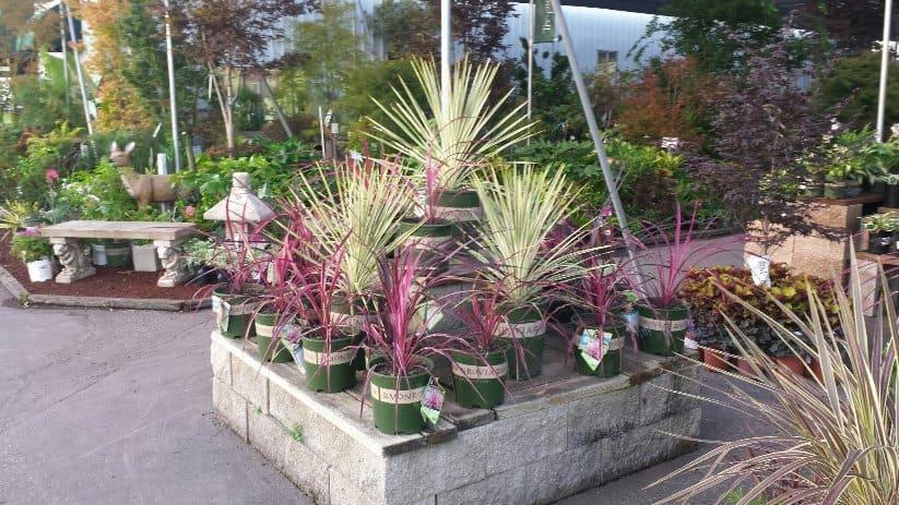 Drought Tolerant Plants in San Jose