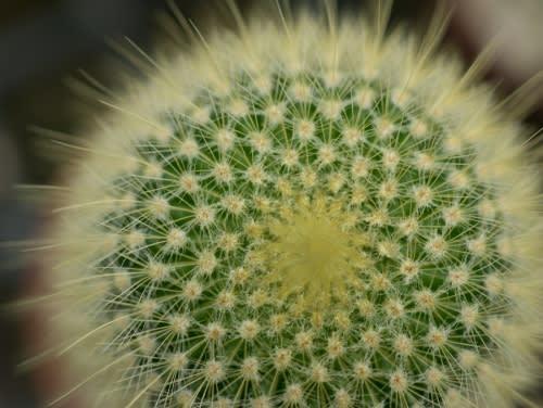 Cacti Maintaining Tips