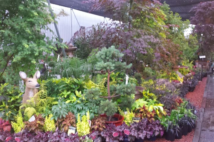 Water Conserving Tips for Home Garden by Payless Hardware & Rockery
