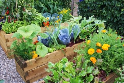 Steps for Creating a Vegetable Garden