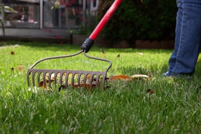 Tips for Lawn Maintenance in San Jose, CA