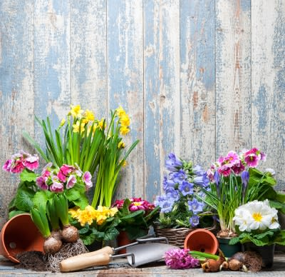 Garden Maintaining Tips for Summer by Payless Hardware & Rockery