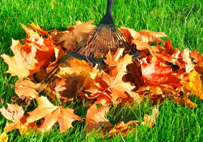 Landscaping Tips for Autumn by Payless Hardware & Rockery