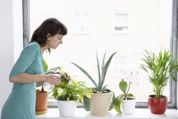 101 House Plants Guide